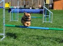 Hopp Dogs