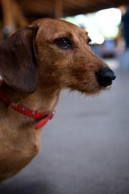Hundeausstellung Ebersberg 2015