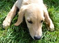Neue Trainingszeiten für Junghunde...
